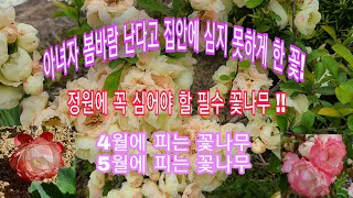영이의뜨락,아름다운정원,정원꾸미기,봄꽃, 꽃나무,명자나…