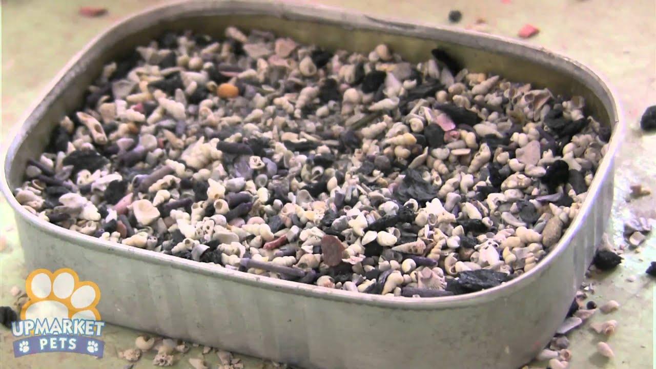 Gouldian Finch Baby Food