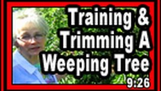 Training & Trimming A Weeping Tree - Wisconsin Garden Video Blog 610