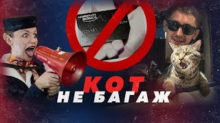 КОТ ВИКТОР И АЭРОФЛОТ НАЙДУТ КОМПРОМИСС  Алексей Казаков