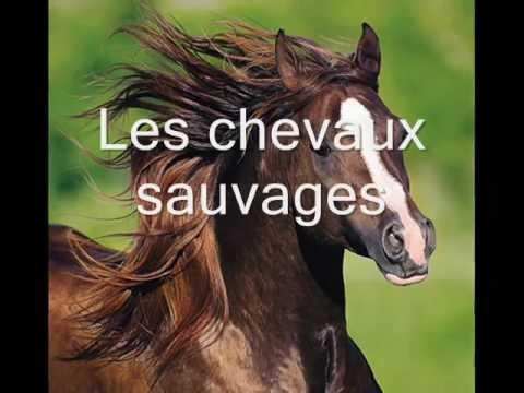 Les chevaux sauvages.wmv