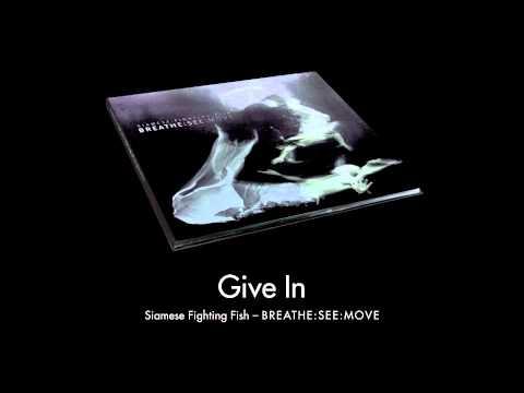 Клип Siamese Fighting Fish - Give in