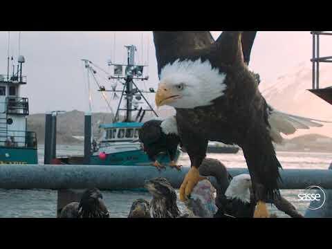 Eagle Takeoff At 1000 Fps - Super Detailed #dinosaurs #wildlife #eagles