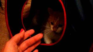 OMG CAT CRAZY INSANE CAT FUNNY PSYCHO POSSESED PLAY NUTTY SILLY HILARIOUS GROWLING LOUDLY HISSING