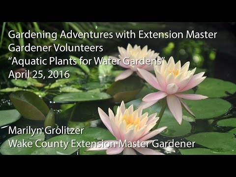 """Aquatic Plants for Water Gardens"""