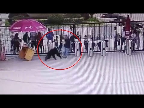 Chimpanzee escapes enclosure, attacks keeper in wildlife park