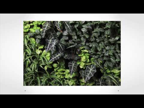 Integrating nature into urban environments | Bianca Bodley | TEDxVictoria