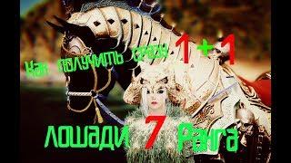 BlackDesert(БДО) Скрещивание и разведение лошадей/ Прокачка лошадей 2018