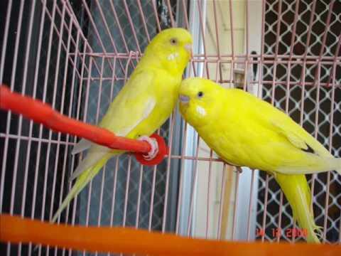 test birds gzk