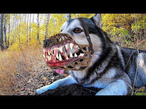 Собаки Напали на Соседей! ТВАРЬ БЕЗ НАМОРДНИКА теперь Я!