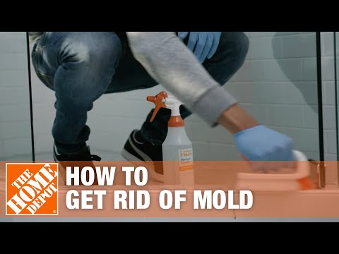 How to Get Rid of Mold at your home in Toronto