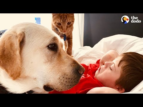 download This Dog Loves Making His Favorite Boy Happy | The Dodo