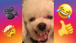 ZapInstaVideos#1: CUT AND FUNNY DOGS