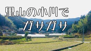 【ガサガサ】里山の小川でガサガサ!