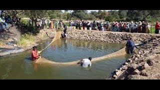 How to start fish farming