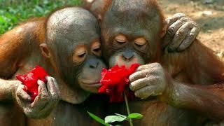 Любовь,любовь...Красивая музыкальная открытка о любви.Любите друг друга.Позитив.Юмор.