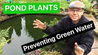 How do we prevent green water | Pond Plants | UK