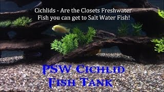 Psw Cichlid Fish Tank Update Ep #1 - Marineland Led Aquarium Kit 55! (hd)