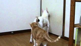 リキは、ご飯の前にドアの前でおかしなジャンプをします。 でも、白い壁...
