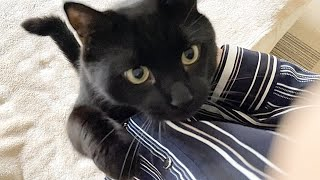 地震の揺れが収まり安心した猫が抱きついてきました