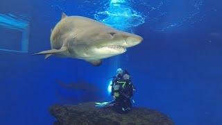 Buceo con Tiburones - Palma Aquarium