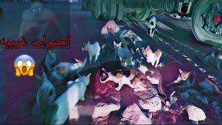 قررنا ننقل القطط والكلاب من المنطقه المهجوره !! بنص الليل😱