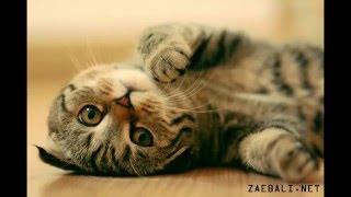 Красивые животные. Смотрите не пожалеете! Beautiful animals. Watch you will not regret!