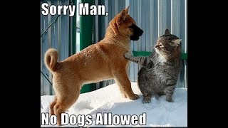 ♥Cute cat and dog funny compilation 2018♥ #1 - FunnyAnimals