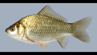 Ю тв рыбалка 10 выпуск