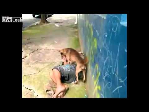 kenhvideo.com - Con chó đòi ... quan hệ với người