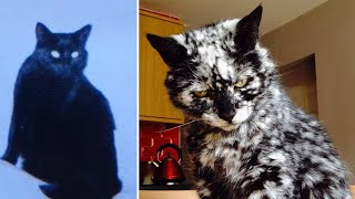 Black Cat Made a Bizarre Transformation as He Aged That Led His Owner to Question His Habits