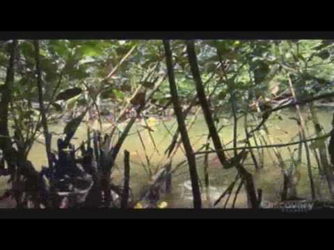 Man vs Wild - The Pacific Island - Part 6