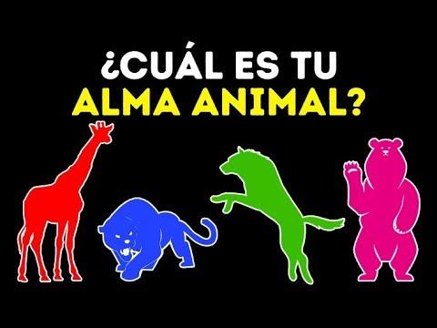 ¿Cuál es el animal de tu alma? Un test de personalidad genial