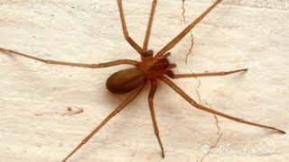Evitar das da como aranha se livrar veias