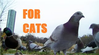 BEST Video for Cats to Watch Squirrels,Bunnies,Pigeons, Birds,(Video for Cats to Watch., 2015-11-22T08:36:10.000Z)