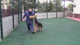Как отучить собаку прыгать на хозяина используя рукав(http://www.walkservice.ru/Forum/showthread.php?385 - для ОБСУЖДЕНИЙ и вопросов, и не забывайте ставить НРАВИТСЯ и ПОДПИСЫВАТЬСЯ...., 2013-11-14T18:31:46.000Z)