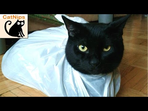Clumsy Cat Gets Head Stuck In Plastic Bag | CatNips