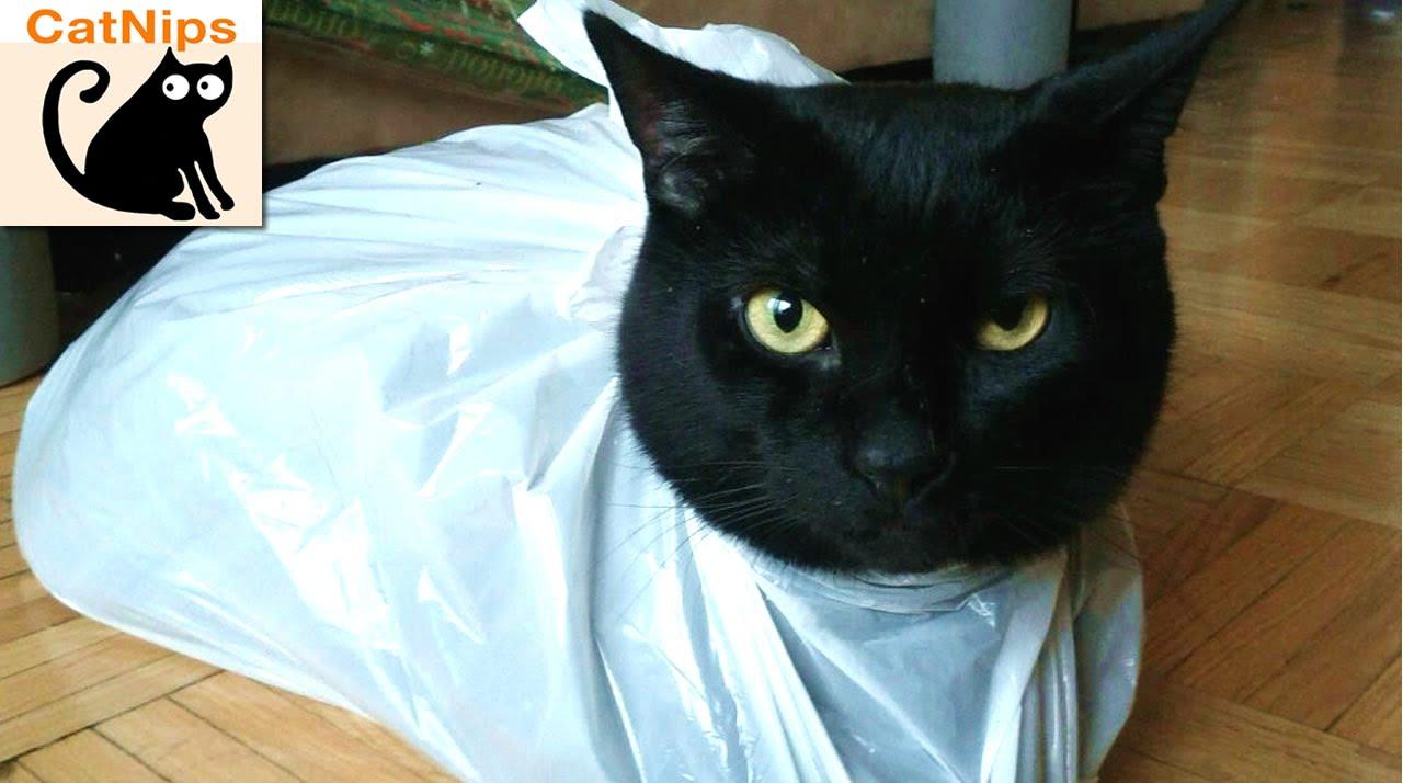 Cat Gets Head Stuck In Bag