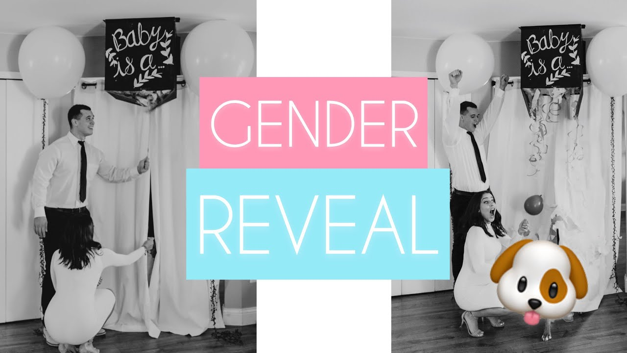 baby-ciciotti-gender-reveal-ft-dogs