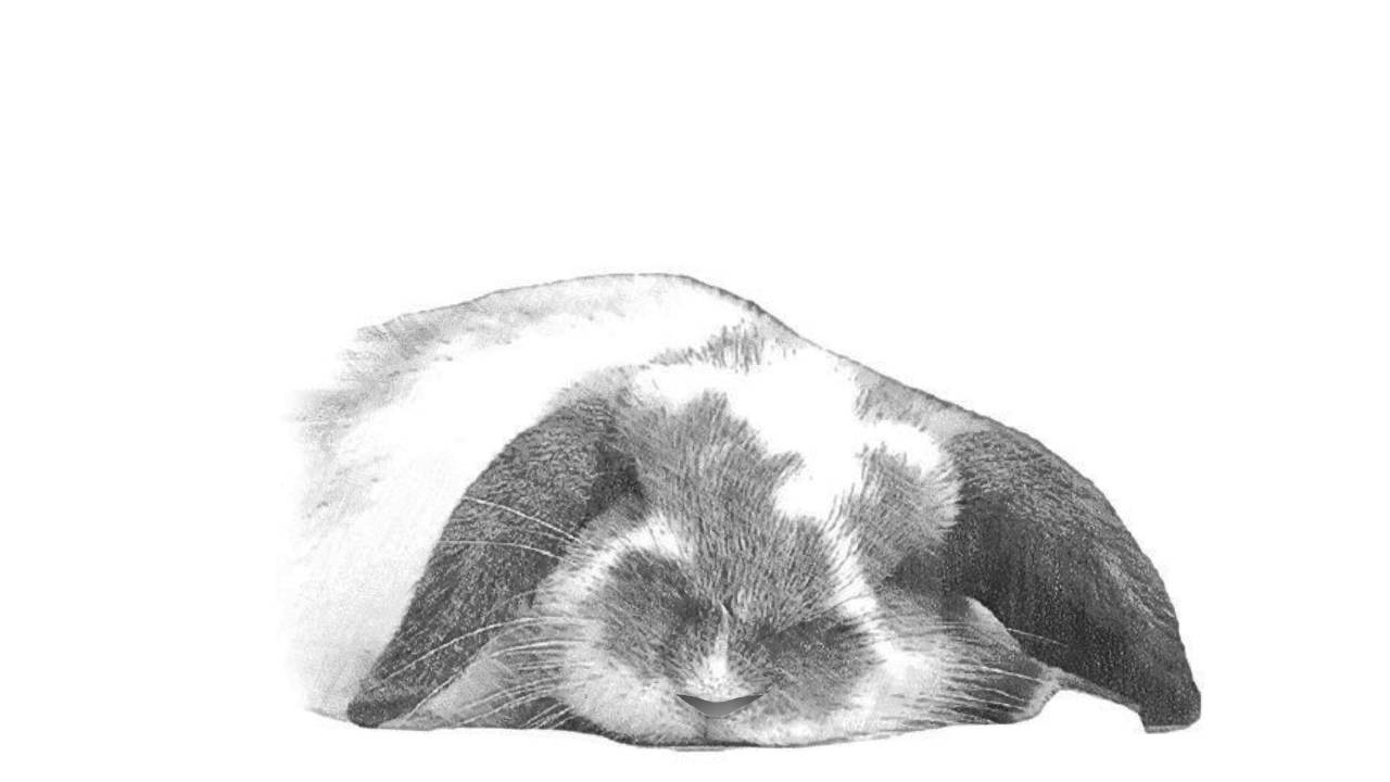 The Animal Sounds: Loud Bunny Rabbit Snoring - Sound ...