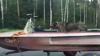 Собака на лодке 110км