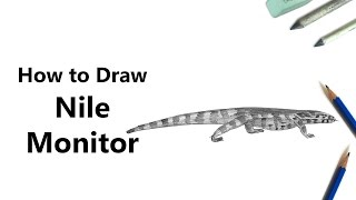 How to Draw a Nile Monitor with Pencils [Time Lapse]