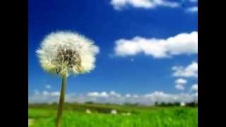 ACE OF BASE-LIFE IS A FLOWER
