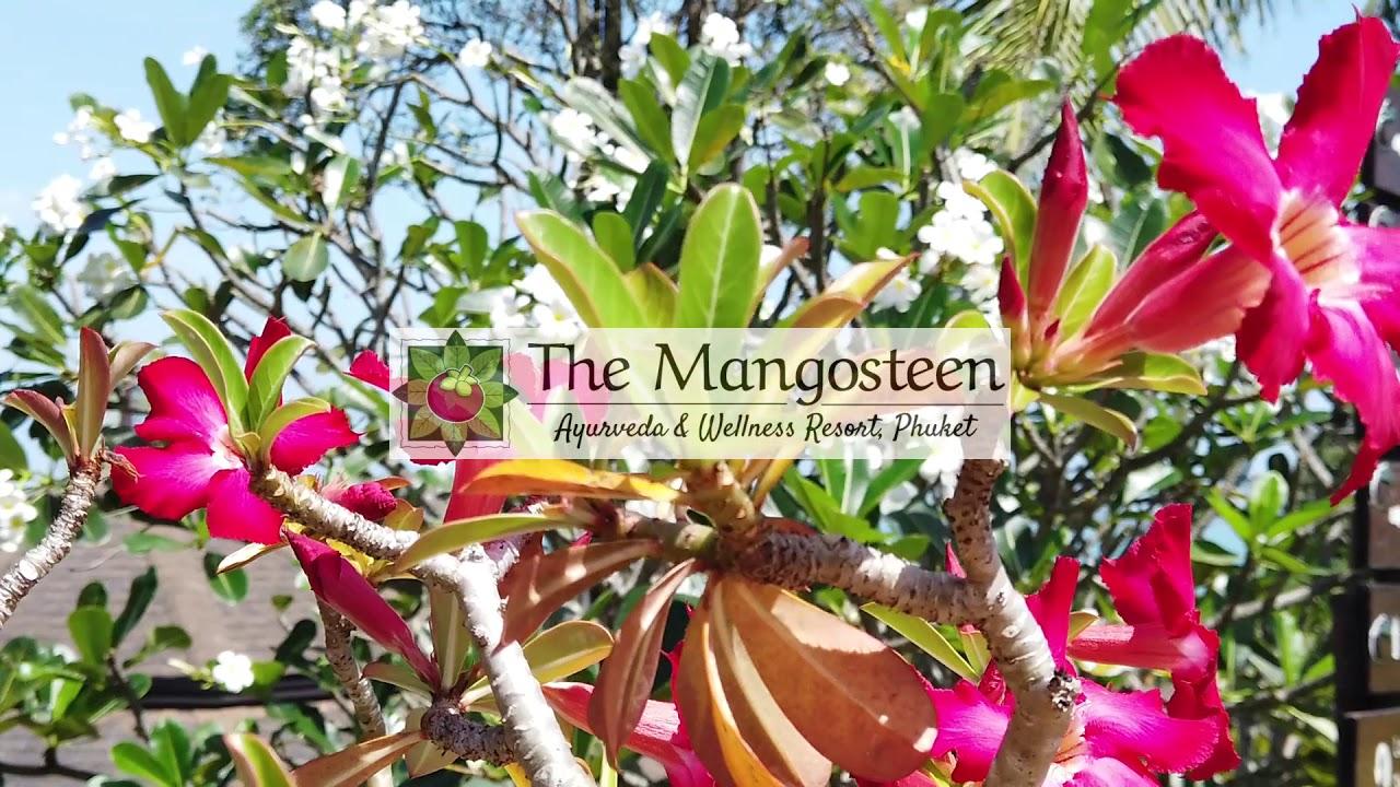 Mangosteen Ayurveda & Wellness Resort, Rawai, Phuket | HOME