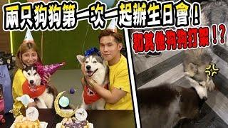 【狗比人好命】竟然也有生日会?兩只狗狗第一次一起辦生日會!差點和其他狗狗打架!?(Jeff & Inthira)