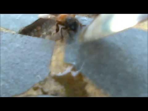 SanTenChan soccorre un ape SanTenChan rescues a bee