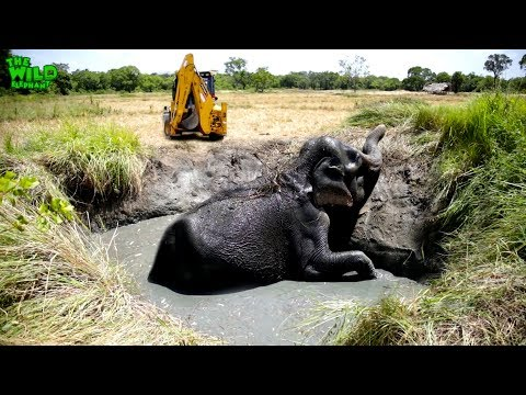 Elephant falls into a farm well and gets rescued   Best rescue team video