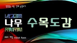 한국의 수목도감, 대왕송