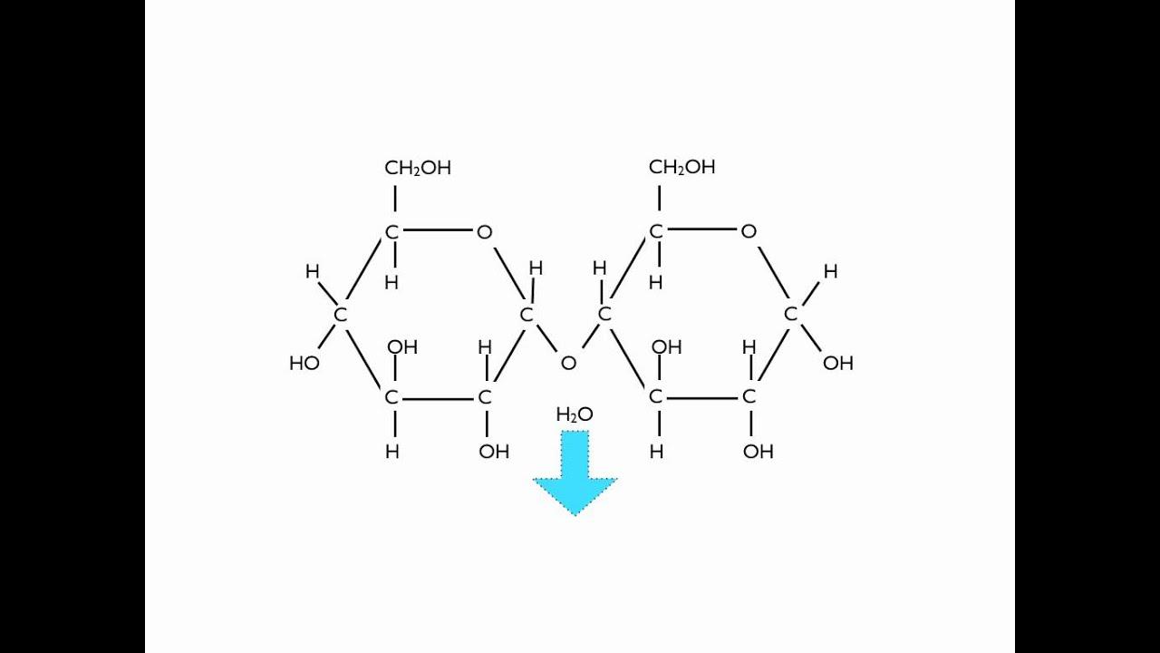condensation polymerisation glucose to maltose [ 1280 x 720 Pixel ]