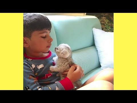 Heart Melting Cute Kitten – Cutest Kitten in the World | Adorable Cat Videos